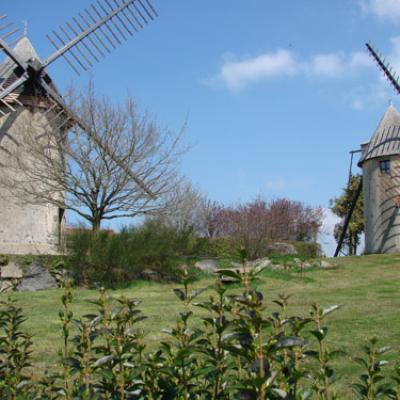 Terrier Marteau, Moulins jumeaux:Pouzauges